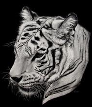 Tablou tigru 002