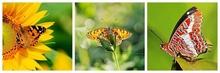 Multicanvas splendoarea fluturilor