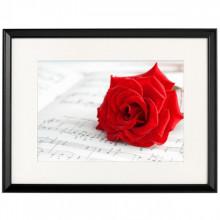 Poster + Rama Trandafir Rosu BROS10