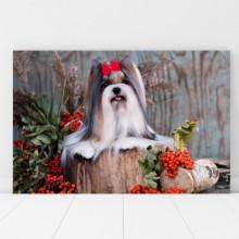 Tablou Canvas Catelusa Yorkshire Terrier DGS12