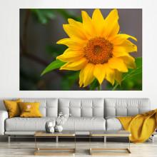 Tablou Canvas Floarea Soarelui SFW21