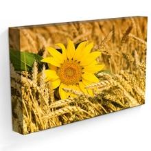 Tablou Floarea Soarelui in Lan de Grau
