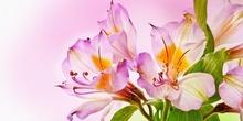 Tablou flori primavara 01