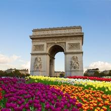 Tablou Lalele pe la Arcul de Triumf, Paris
