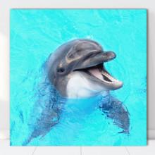 Tablou Canvas Delfin Zambaret AQF27