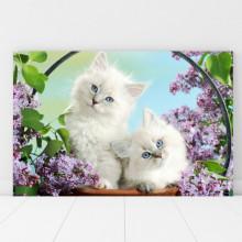 Tablou Canvas Pisicute Albe cu Ochi Albastri CAT15