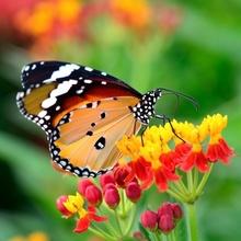 Tablou Fluture pe Floare in Gradina