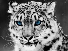 Tablou leopard 007