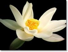 Tablou lotus 03