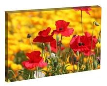 Tablou Maci printre flori galbene