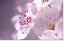 Tablou diverse flori 02
