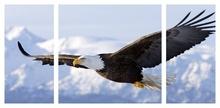 Multicanvas vultur deasupra muntilor