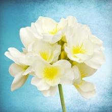 Tablou canvas modern floral 04