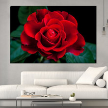 Tablou Canvas Trandafir Rosu Caprice ROS56
