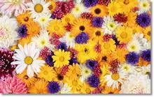 Tablou diverse flori 17