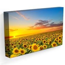 Tablou Floarea Soarelui in Apus