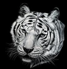 Tablou tigru 003