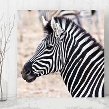 Tablou Zebra din profil anz28