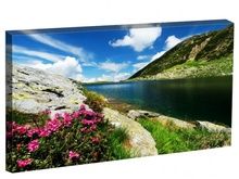 Tablou Flori de munte in Parcul National Retezat Romania st7566