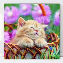 Tablou Canvas Pisic Somnoros CAT12