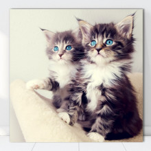 Tablou Canvas Pisicute Curioase CAT1
