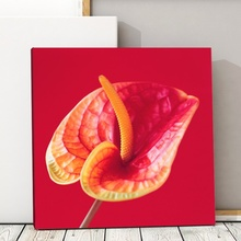 Tablou Decorativ Anthurium fan8