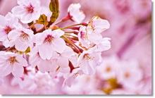 Tablou diverse flori 10