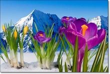 Tablou Flori de Munte pmon6