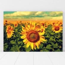 Tablou Canvas Floarea Soarelui SFW20