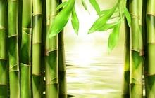Tablou bambus 01