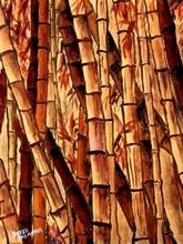 Tablou bambus 07