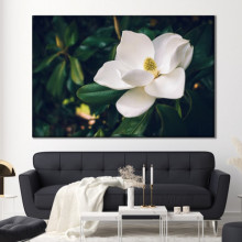 Tablou Canvas Magnolia Grandiflora CFB23