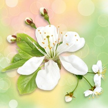 Tablou canvas modern floral 10