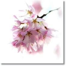 Tablou diverse flori 07