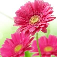 Tablou flori de primavara 03