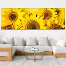 Tablou Panoramic Floarea Soarelui ASB34