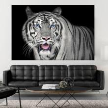 Tablou Tigru Siberian cu Ochi Albastri AFE33