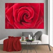 Tablou Canvas Trandafir Rosu ROS41
