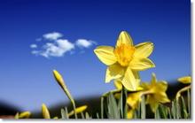 Tablou diverse flori 03
