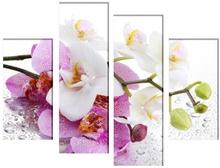 Multicanvas Orhidee dfl30