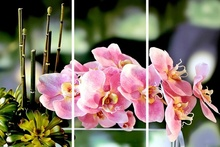 Multicanvas orhidee roz cu fundal verde