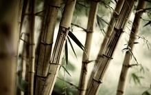 Tablou bambus 06