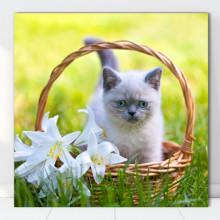 Tablou Canvas Pisicuta in Cosulet cu Crini CAT10