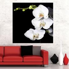Tablou Orhidee Alba in Fundal Negru