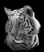 Tablou tigru 004