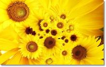 Tablou floarea soarelui 04