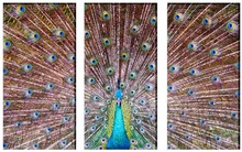 Multicanvas Paun Multicolor