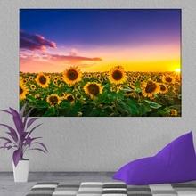 Tablou Camp cu Floarea Soarelui asb27