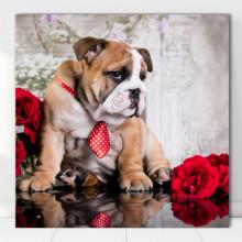 Tablou Canvas Bulldog Australian cu Cravata Rosie DGS9