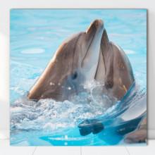 Tablou Canvas Delfini Jucausi AQF28
